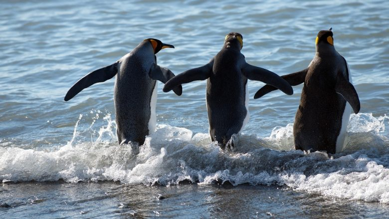 Десять интересных фактов о пингвинах