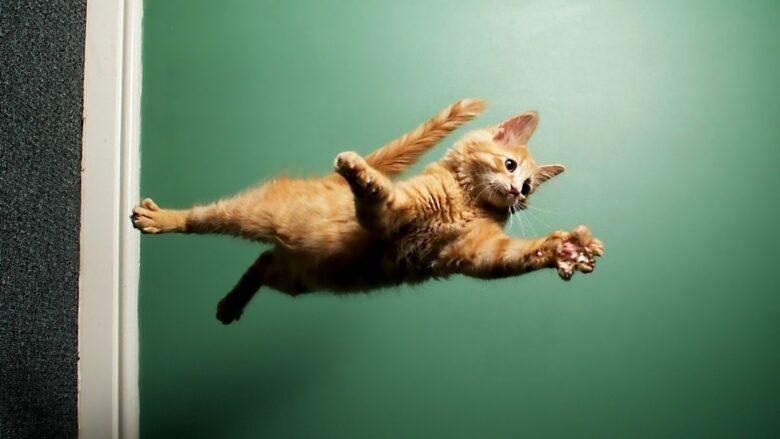 Что нужно знать о кошках