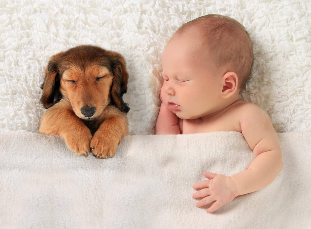 Животные для маленьких детей фото